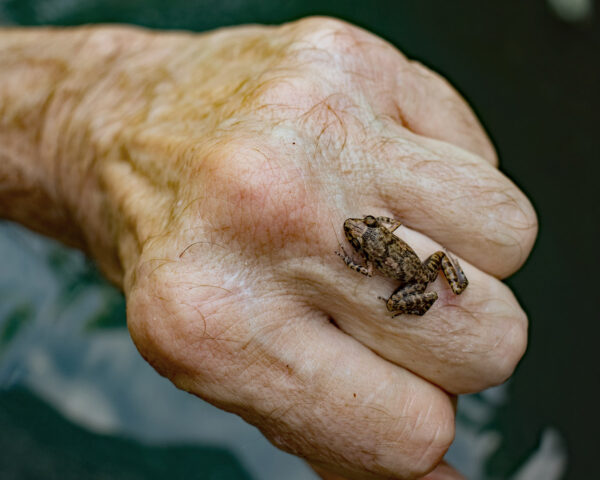 small frog, male hand, middle finger, ring, Richard Pollin, photographer, St Pete, Florida, Kenwood